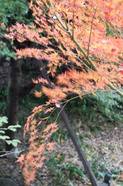 f:id:gzutetsu:20101128132141j:image