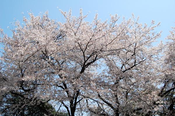 f:id:gzutetsu:20110410122930j:image