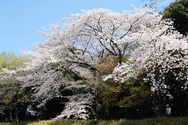f:id:gzutetsu:20110410122942j:image