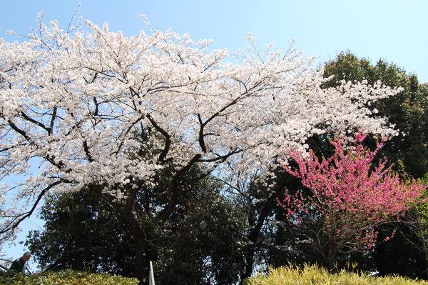 f:id:gzutetsu:20110410123350j:image