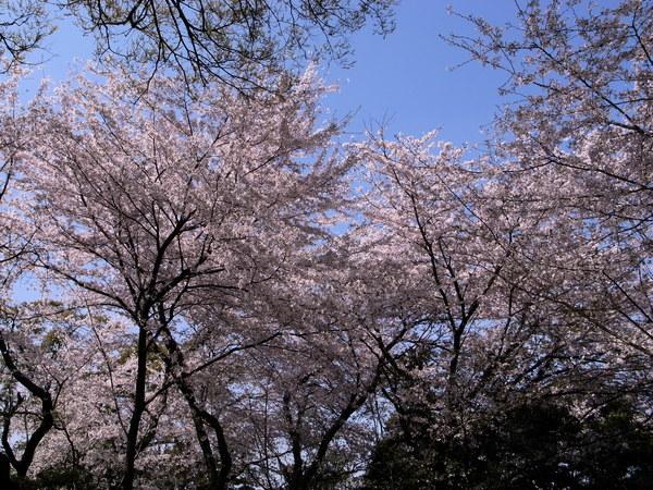f:id:gzutetsu:20110410135813j:image