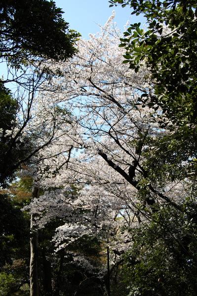 f:id:gzutetsu:20110410140736j:image