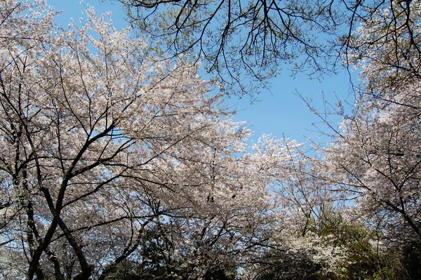 f:id:gzutetsu:20110410141905j:image