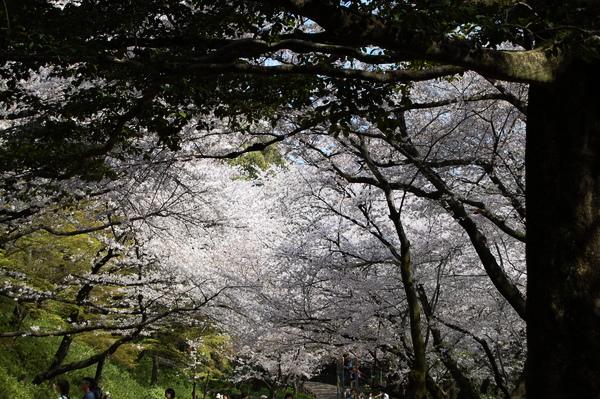 f:id:gzutetsu:20110410144502j:image