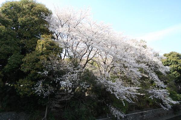 f:id:gzutetsu:20110410145342j:image
