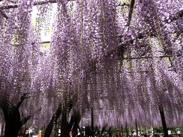 f:id:gzutetsu:20110502125210j:image