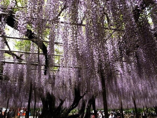 f:id:gzutetsu:20110502131038j:image