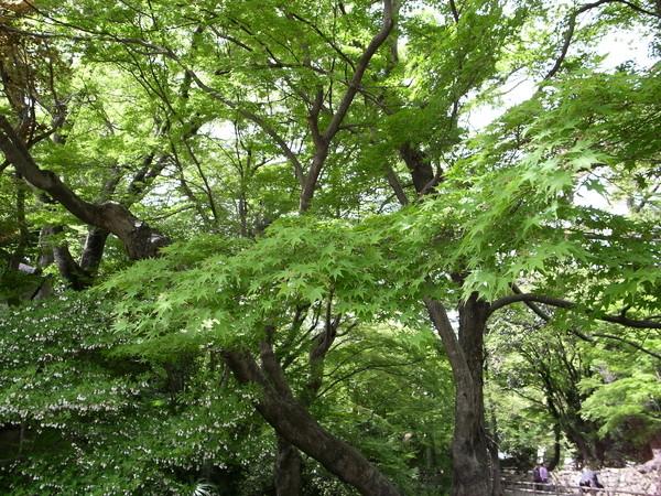 f:id:gzutetsu:20110502134646j:image