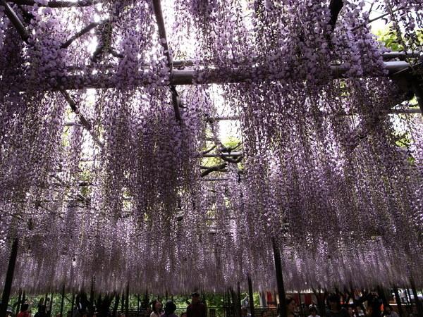 f:id:gzutetsu:20110502145642j:image