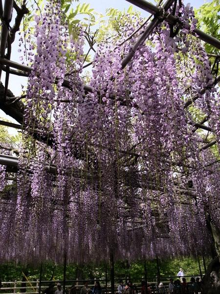 f:id:gzutetsu:20110502145728j:image