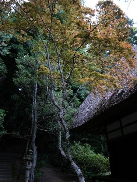 f:id:gzutetsu:20110811162825j:image