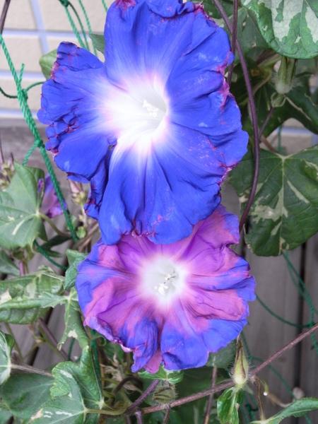 f:id:gzutetsu:20111005075257j:image