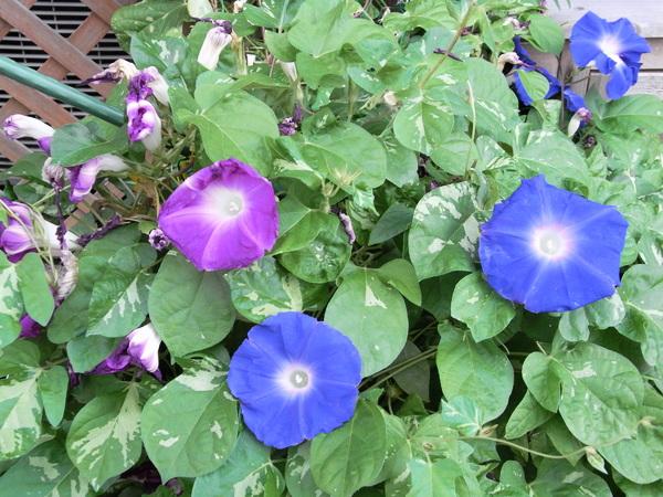 f:id:gzutetsu:20111005075407j:image