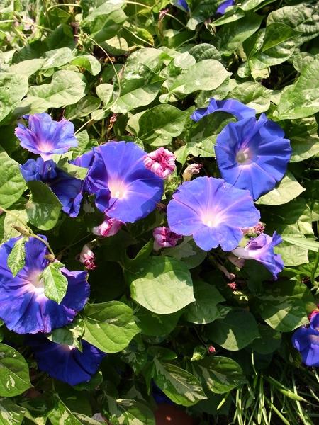 f:id:gzutetsu:20111010072810j:image
