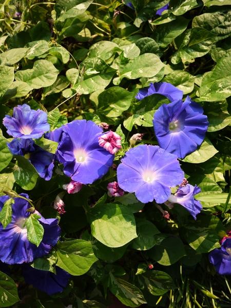 f:id:gzutetsu:20111010073114j:image