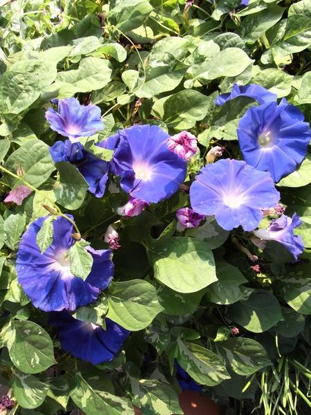 f:id:gzutetsu:20111010073323j:image