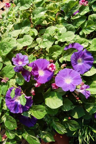 f:id:gzutetsu:20111010075944j:image