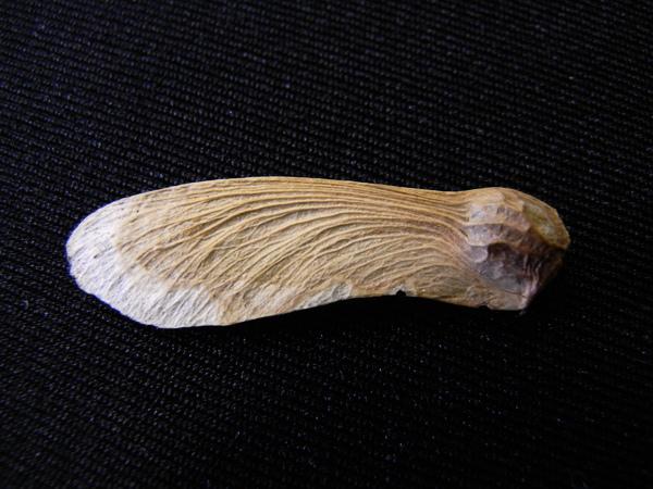 f:id:gzutetsu:20111112102027j:image
