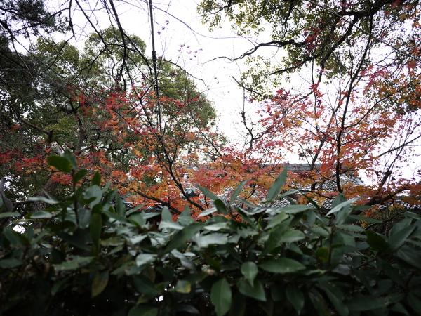 f:id:gzutetsu:20120101124921j:image