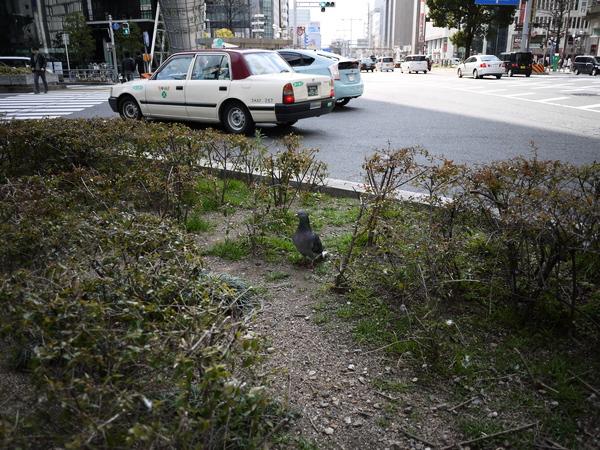 f:id:gzutetsu:20120212104225j:image
