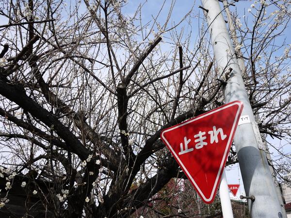 f:id:gzutetsu:20120310145210j:image