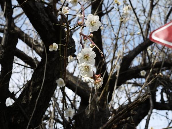 f:id:gzutetsu:20120310145228j:image