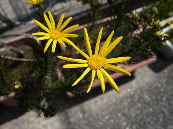 f:id:gzutetsu:20120311111951j:image
