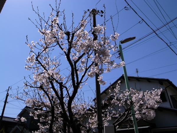 f:id:gzutetsu:20120408110938j:image