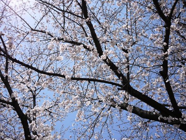 f:id:gzutetsu:20120408112400j:image