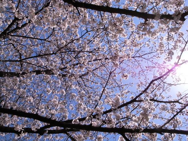 f:id:gzutetsu:20120408112527j:image
