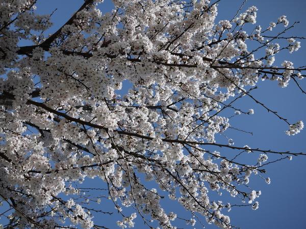 f:id:gzutetsu:20120408112931j:image
