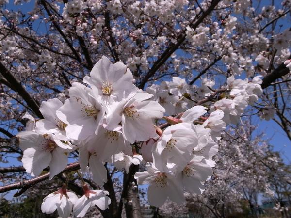f:id:gzutetsu:20120408113543j:image