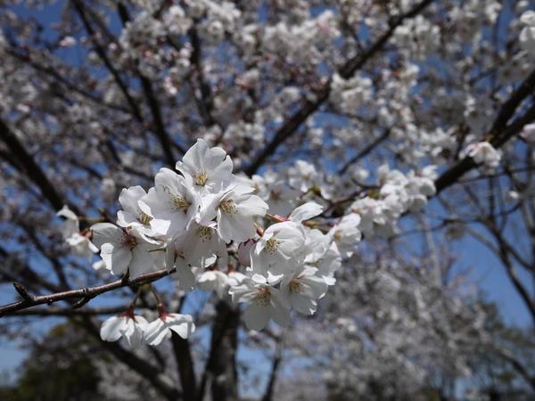 f:id:gzutetsu:20120408113738j:image
