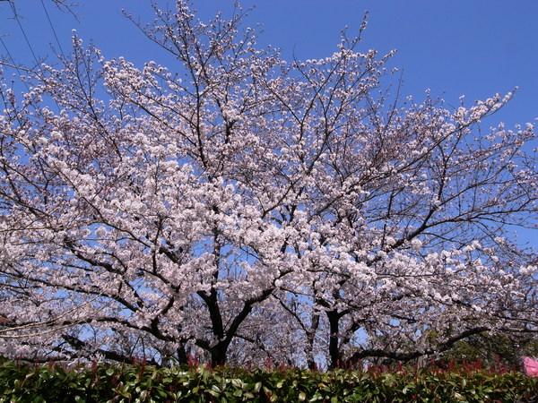 f:id:gzutetsu:20120408114140j:image
