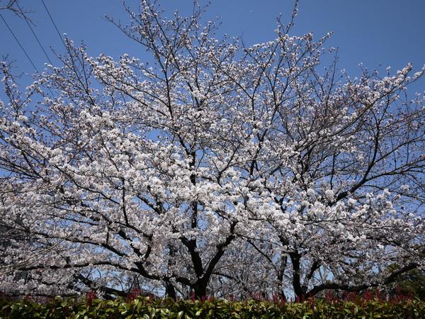 f:id:gzutetsu:20120408114200j:image
