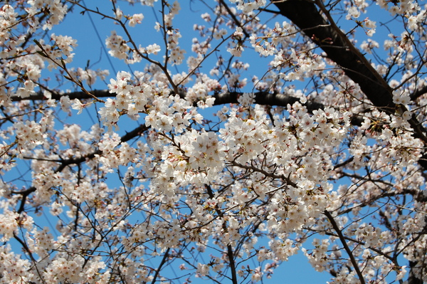 f:id:gzutetsu:20120408120524j:image