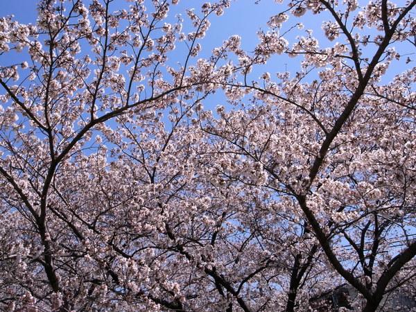 f:id:gzutetsu:20120408120617j:image