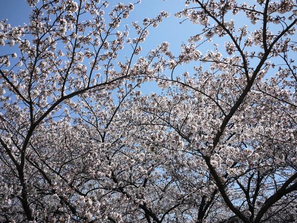 f:id:gzutetsu:20120408120723j:image