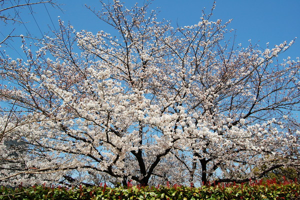f:id:gzutetsu:20120408122239j:image