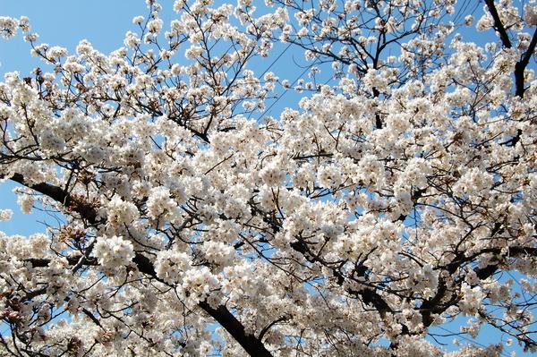 f:id:gzutetsu:20120408132454j:image
