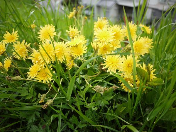 f:id:gzutetsu:20120429150640j:image