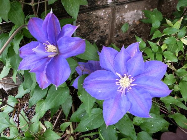 f:id:gzutetsu:20120503094402j:image