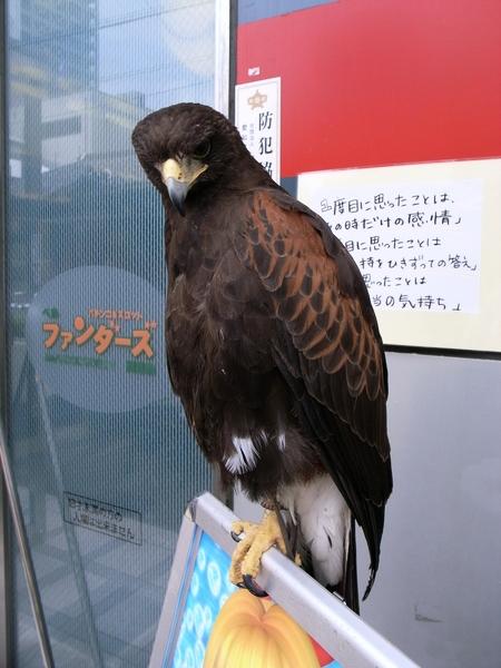 f:id:gzutetsu:20120601112834j:image