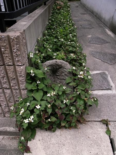 f:id:gzutetsu:20120602120240j:image