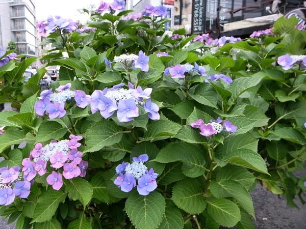 f:id:gzutetsu:20120622162028j:image