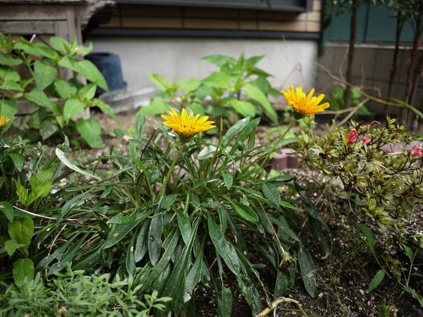 f:id:gzutetsu:20120624112746j:image