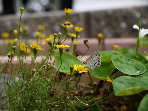 f:id:gzutetsu:20120715104928j:image