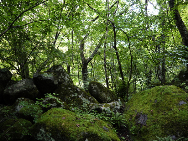 f:id:gzutetsu:20120815153221j:image