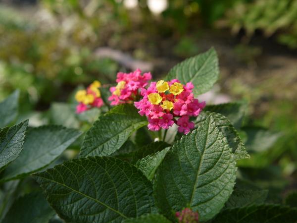 f:id:gzutetsu:20120923141935j:image