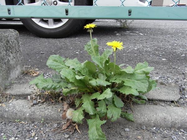 f:id:gzutetsu:20121109104226j:image